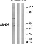 C14220-1 - ABHD8