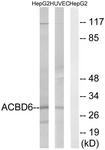 C14262-1 - ACBD6