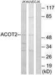 C14271-1 - ACOT2
