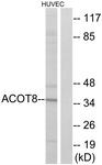 C14273-1 - ACOT8