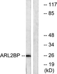 C14350-1 - ARL2BP
