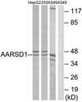 C14374-1 - AARSD1
