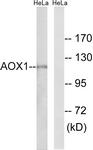 C14391-1 - Aldehyde oxidase
