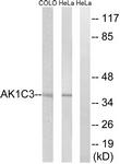 C14395-1 - AKR1C3 / DDH3