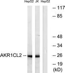 C14398-1 - AKR1CL2 / AKRDC1