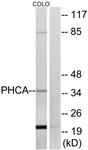 C14411-1 - ACER3 / PHCA