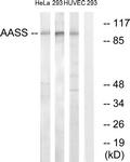 C14422-1 - AASS