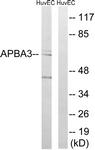 C14450-1 - APBA3 / MINT3