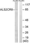 C14463-1 - ALS2CR8 / CARF