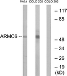 C14562-1 - ARMC6