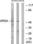 C14564-1 - Arylsulfatase A