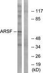 C14568-1 - Arylsulfatase F