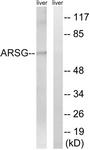 C14569-1 - Arylsulfatase G