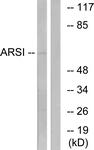 C14571-1 - Arylsulfatase I