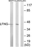 C14718-1 - LFNG