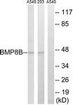 C14767-1 - BMP8B