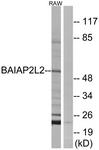 C14788-1 - BAIAP2L2
