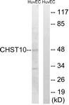 C14921-1 - CHST10