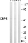 C14961-1 - Carboxypeptidase E