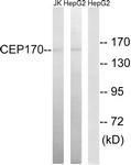 C15040-1 - CEP170