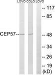 C15044-1 - CEP57
