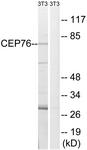 C15049-1 - CEP76