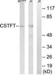 C15167-1 - CSTF2T