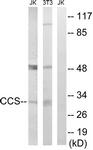 C15251-1 - CCS / SOD4