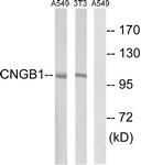 C15265-1 - CNGB1