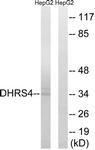 C15323-1 - DHRS4