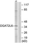 C15350-1 - DGAT2L6