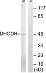 C15356-1 - DHOdehase