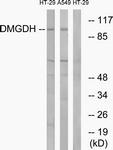 C15359-1 - DMGDH