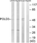 C15428-1 - POLD3