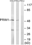 C15435-1 - DNA primase small subunit