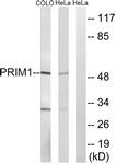 C15435-1 - DNA primase small subunit