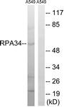 C15463-1 - CD3EAP