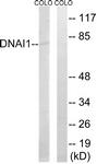 C15510-1 - DNAI1