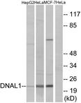C15512-1 - DNAL1