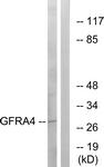 C15896-1 - GFRA4 / GDNFR-alpha 4
