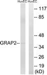 C15966-1 - GRAP2