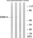 C15971-1 - GRB14