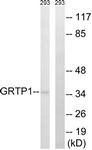 C15978-1 - GRTP1 / TBC1D6