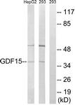 C15982-1 - GDF15