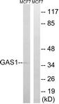 C15990-1 - GAS1