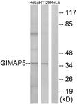 C16005-1 - GIMAP5