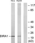 C16016-1 - DIRAS1