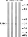 C16022-1 - RRAD / RAD