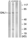 C16070-1 - GNL1 / HSR1
