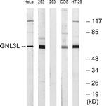 C16072-1 - GNL3L